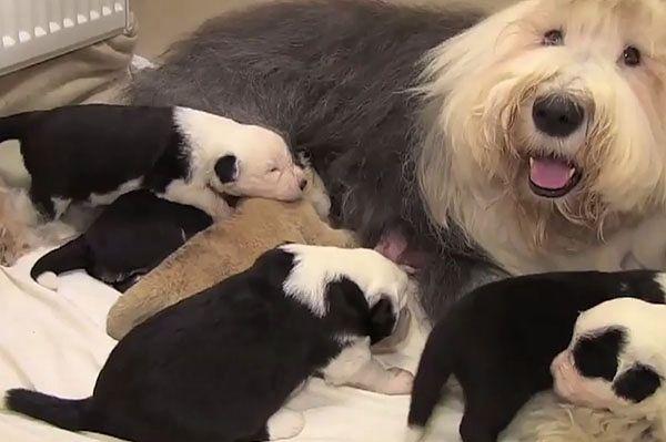 Porzucone lwiątko znalazło nową mamę. Niezwykła rodzina