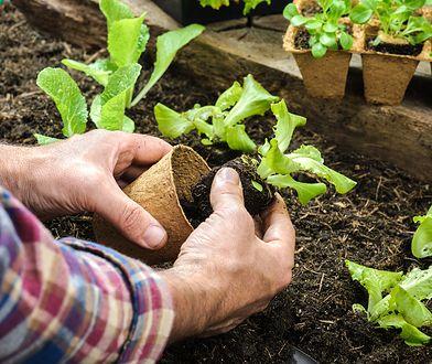 Niedługo przyjdzie czas na pierwsze w tym roku prace ogrodowe