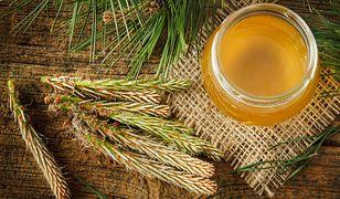 Jak wykorzystać właściwości lecznicze sosny