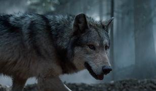 Wilki wyją w Warszawie. Wiemy, o co chodzi
