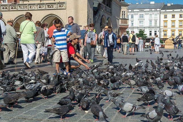 Jednym z poważnych zagrożeń dla historycznych budowli są skutki bytowania w pobliżu i na budynkach dużych grup ptaków