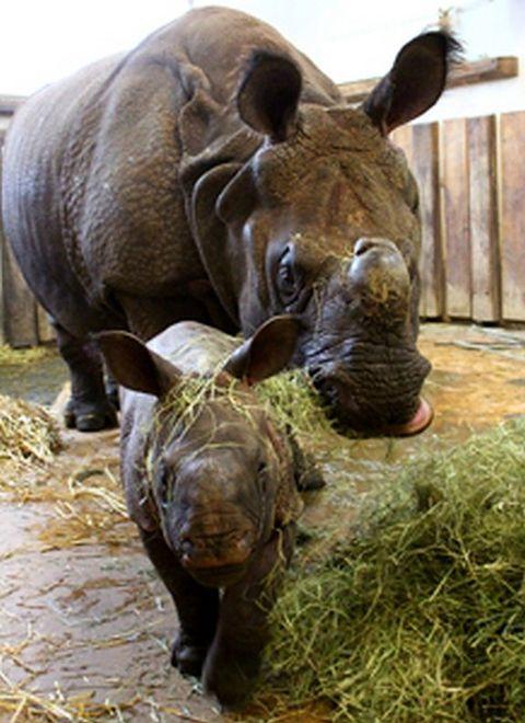 Nowe atrakcje w warszawskim zoo