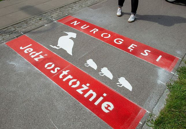 Warszawa. Na ulicy Czerniakowskiej powstało nowe nietypowe oznakowanie