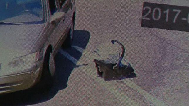 Zostawił chore niemowlę na parkingu i... odjechał
