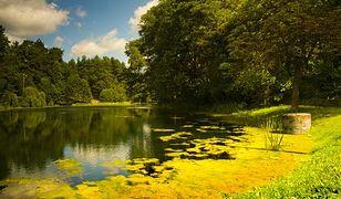 Parki narodowe w Polsce, które warto odwiedzić w maju