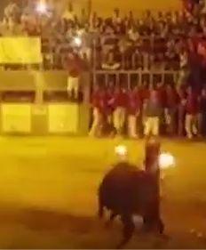 Samobójstwo hiszpańskiego byka. Podpalono mu rogi