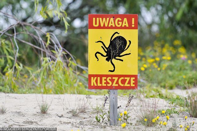 Prawdziwa inwazja kleszczy w Małopolsce. Dane są zatrważające