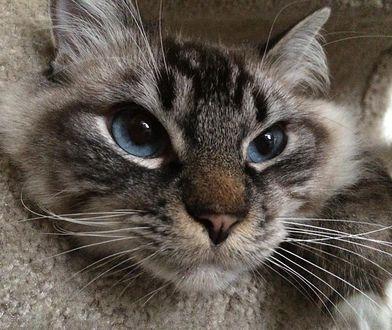 Jedyną zapłatą za nocleg jest opieka nad zwierzakami pod nieobecność ich właścicieli