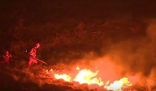 Pożary pochłonęły już znaczną część wrzosowisk