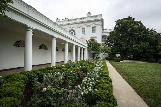 USA. Biały Dom. W ogrodzie różanym posadzono różę wyhodowaną na cześć Jana Pawła II