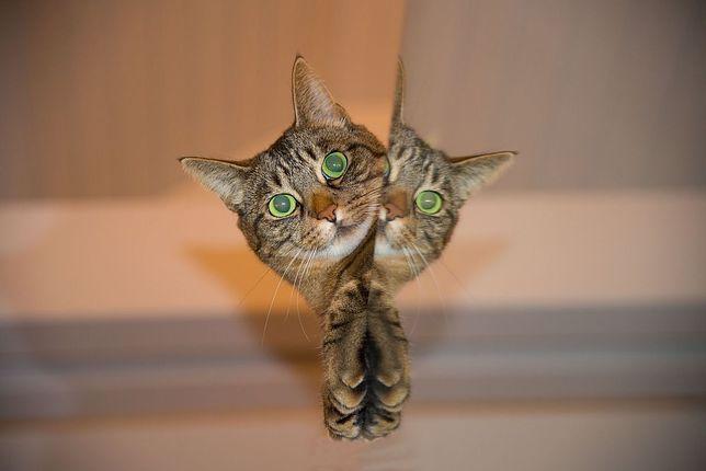 """Alojzy, Lucjan, Ajka i wiele innych czeka na nowy dom. Adoptuj koty ze schroniska """"Na Paluchu"""" [WIDEO]"""