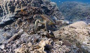 Street View na Wielkiej Rafie Koralowej