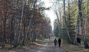 Wszystkich Świętych 2020. Mieszkańcy stolicy tłumnie odwiedzili warszawskie lasy