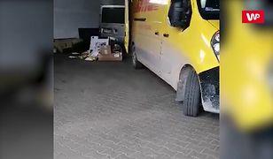 Kurier DHL rzuca paczkami.