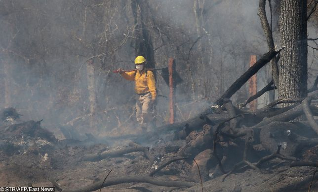 Rekordowe pożary lasów w Amazonii zwróciły uwagę świata