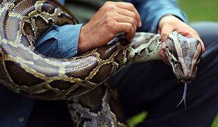 """Łowcy węży z Florydy. Ta """"zabawa""""  jest tylko dla twardzieli"""