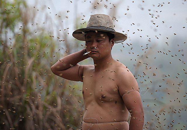 Obsiadło go ponad 460 tysięcy pszczół - zdjęcia