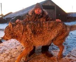 Rolnik zabił wilka. Udusił go gołymi rękami