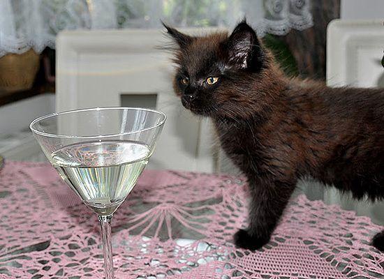 Ciekawska kotka