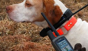 Nowe urządzenia Garmin do lokalizacji i tresury psów