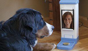 iCPooch - komunikator dla psa