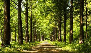 """""""Niespodzianka"""" w polskim lesie"""