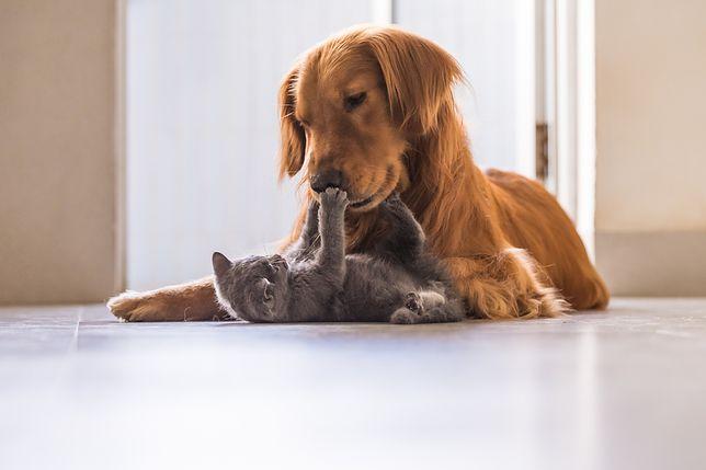 Animals Days 2018 pełne atrakcji dla małych i dużych miłośników zwierząt