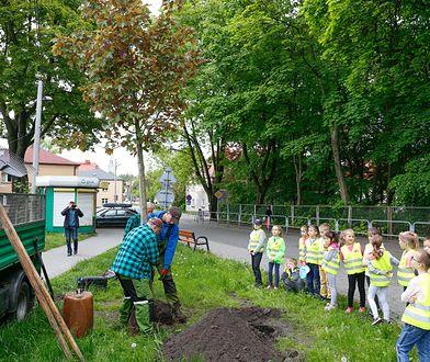 Śląsk. 54 zielone projekty w Katowicach