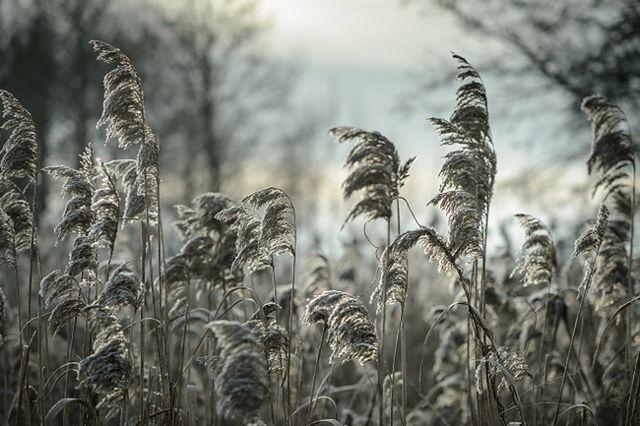 Zima dotarła do Polski - zobacz niezwykłe zdjęcia