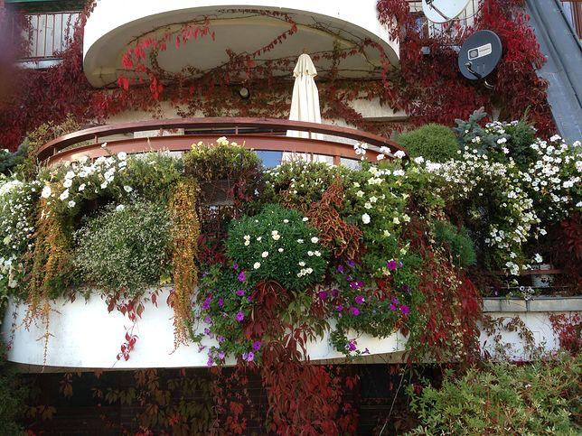 Pokaż nam swój balkon lub ogródek