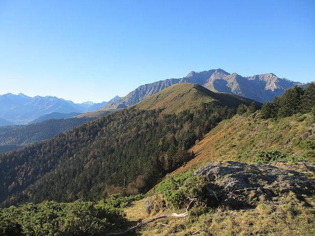 Na makabryczne znalezisko natknął się biegacz górski (pixabay.com)