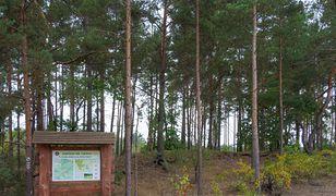 Kampinoski Park Narodowy będzie zamknięty od czwartku.