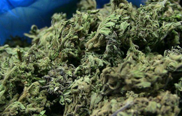 Kanada chce zalegalizować sprzedaż marihuany