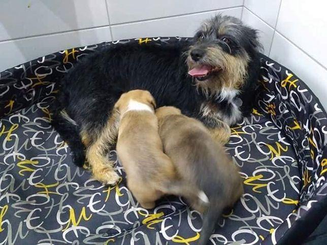 Za utopienie psów podejrzanej grozi do 3 lat więzienia