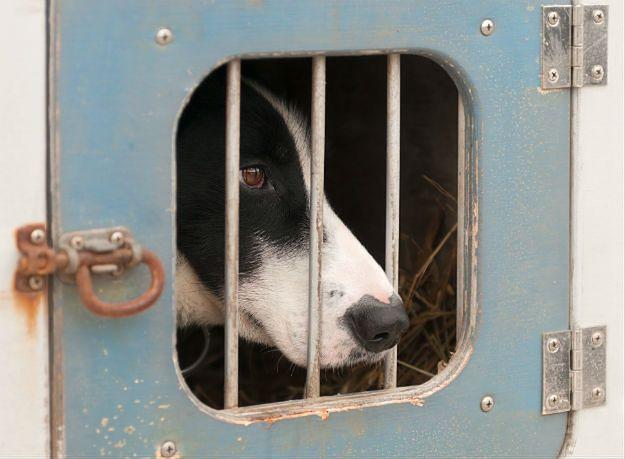 Pies trafił do aresztu domowego. Zniszczył sześć samochodów