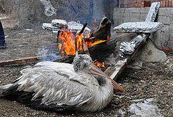 Dramatyczna walka o życie - umierają z zimna i głodu