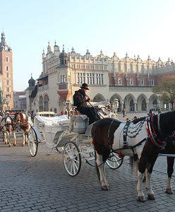 Kraków. Prokuratura podjęła decyzję w sprawie koni dorożkarskich