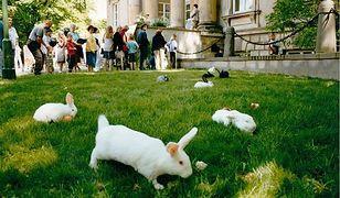 Podążaj za białym królikiem (SPACER)