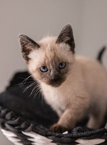 Pomóż kotom ze schronisk – nakarm je z OLX!