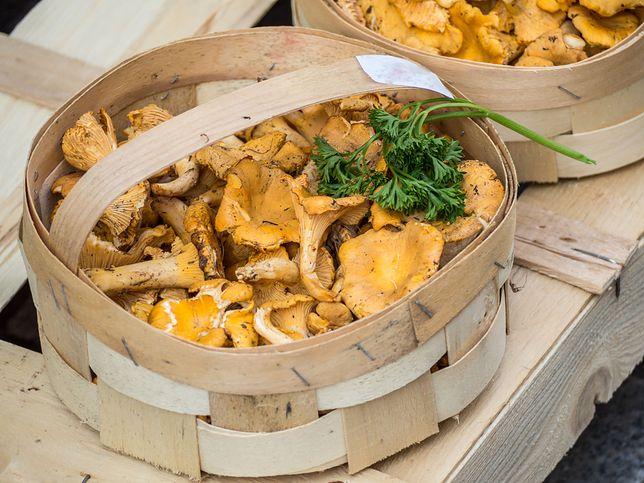 Kurki to jedne z najsmaczniejszych leśnych grzybów