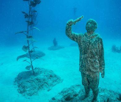 Podwodna kolekcja robi wrażenie Fot. MOUA