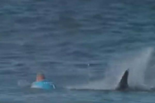 Rekin zaatakował surfera podczas zawodów w RPA (WIDEO)
