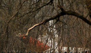 Szczątki rozbitego samolotu w Smoleńsku