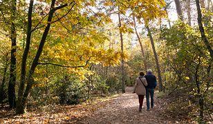 Wracając ze spaceru po lesie należy pamiętać o zabraniu swoich śmieci