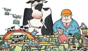 krowy-w-labiryncie.jpg