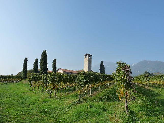 Winnica w Bergamo,  mieście położonym na północy Włoch
