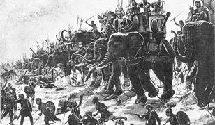 Słonie były wykorzystywane w walce w okresie starożytności i średniowiecza