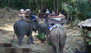 Jeszcze do niedawna słonie w Maesa Elephant Camp musiały wozić turystów na grzbietach