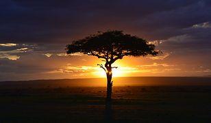 Krajobraz pustynnej Kenii