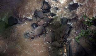 Pięć martwych słoni dostrzegli pracownicy na dnie wodospadu